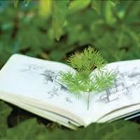 Экологически чистые материалы для отделки помещений